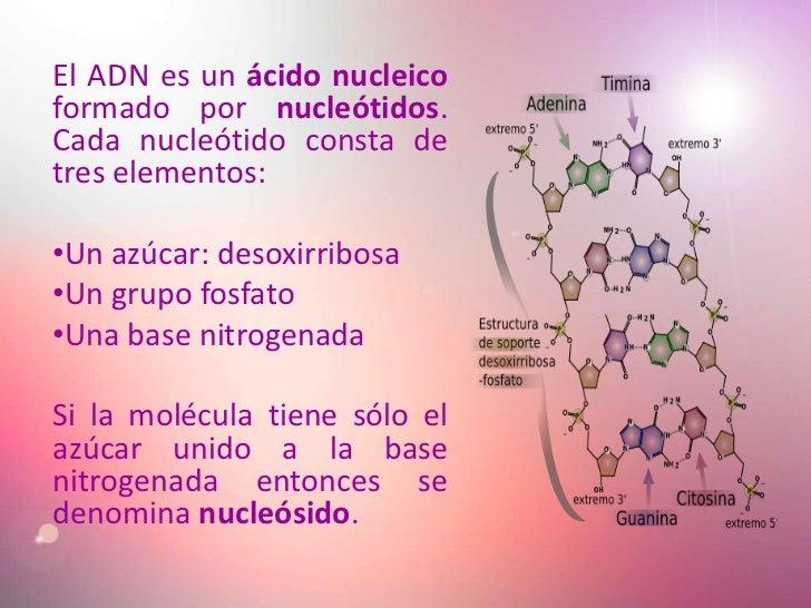 El ADN es un ácido nucleico formado por nucleótidos. Cada nucleótido consta de tres elementos:  •Un azúcar: desoxirribosa ...