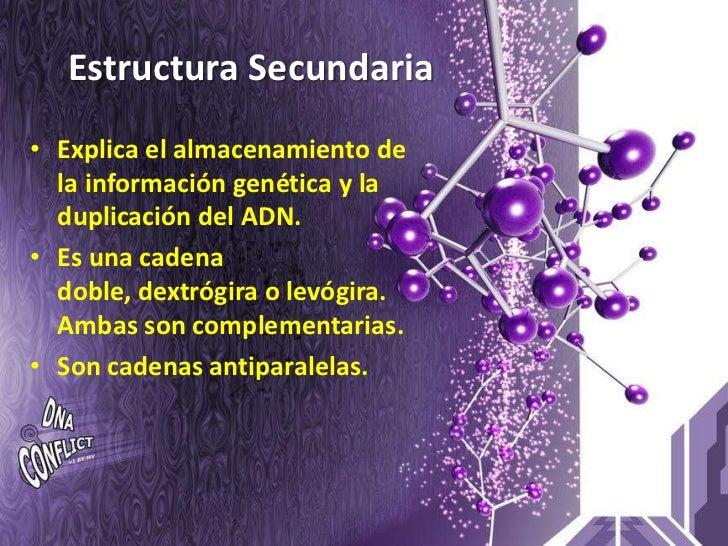 Estructura Secundaria • Explica el almacenamiento de   la información genética y la   duplicación del ADN. • Es una cadena...