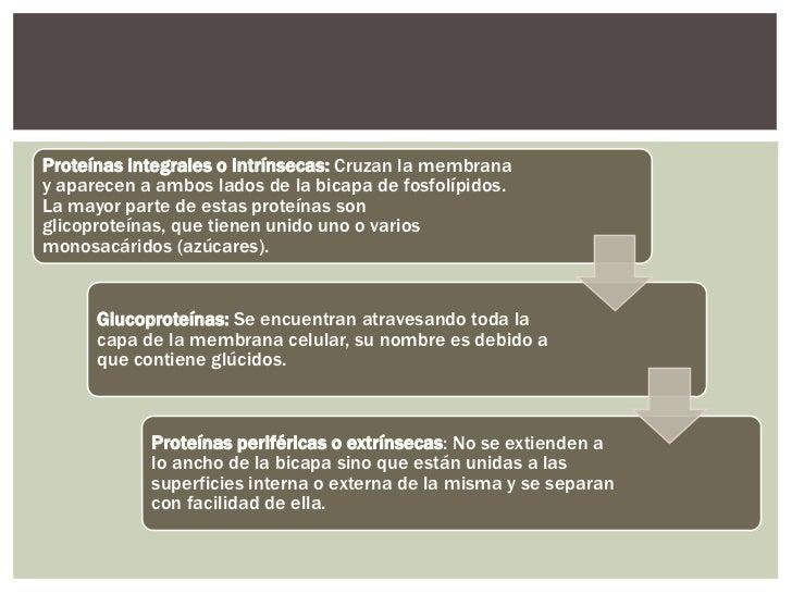 FUNCIONES DE LAS PROTEÍNAS               Proteínas                           Son proteínas que                     Proteín...