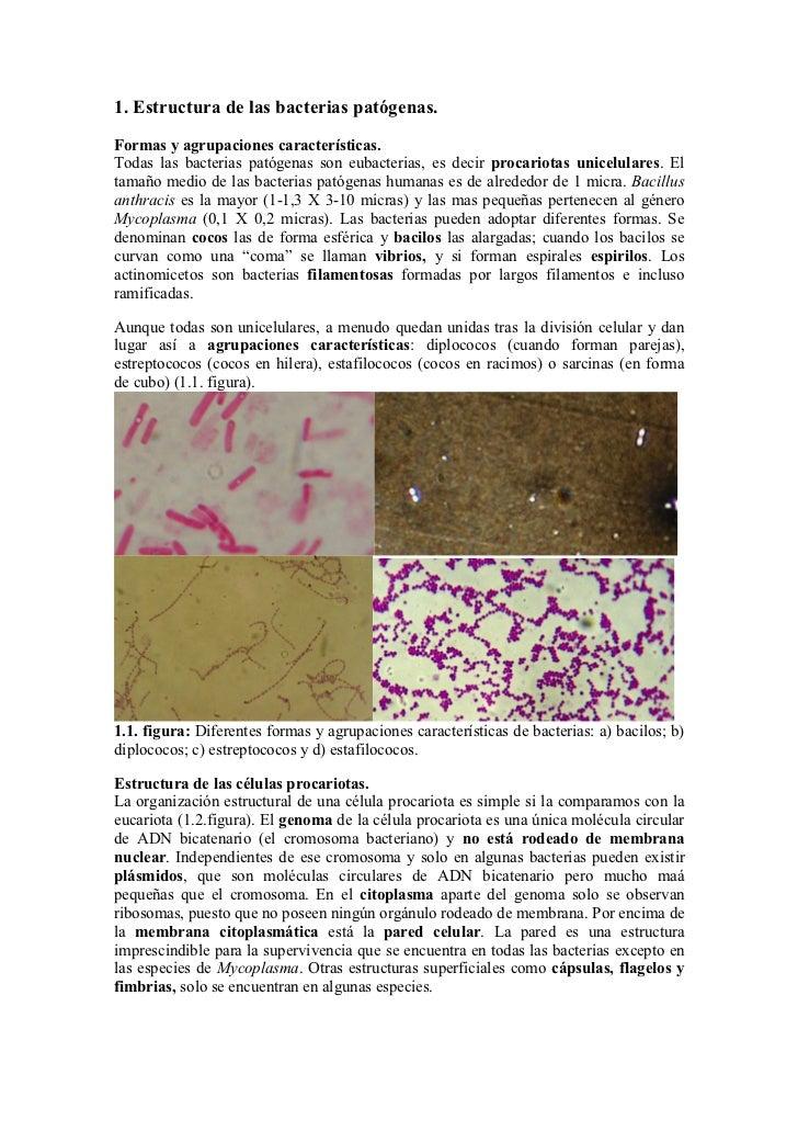 1. Estructura de las bacterias patógenas.Formas y agrupaciones características.Todas las bacterias patógenas son eubacteri...