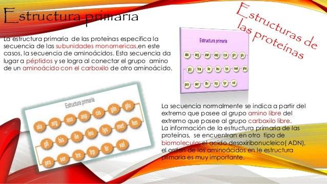 Estructura De Las Proteinas 1