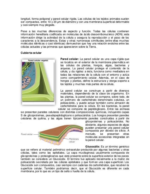 Estructura de los seres vivos estructura celular cubierta celular - Estructuras libros vivos ...