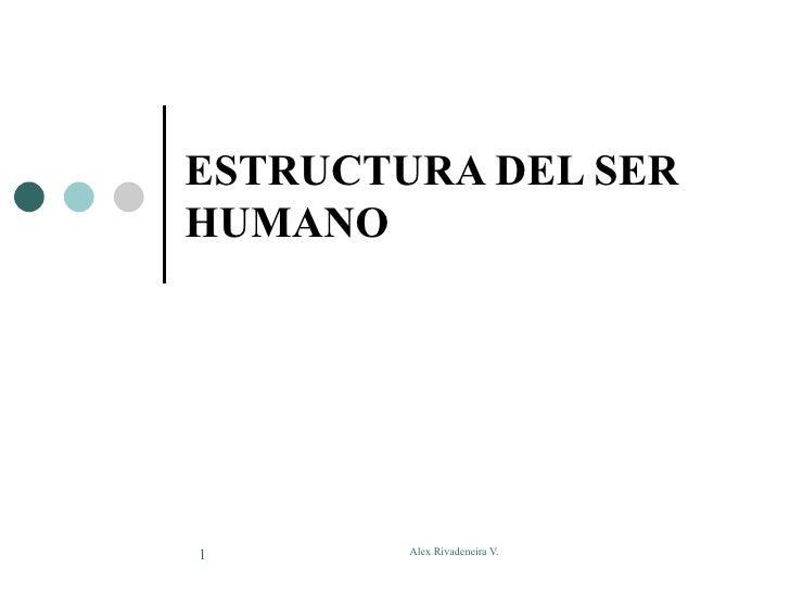ESTRUCTURA DEL SER HUMANO     1       Alex Rivadeneira V.