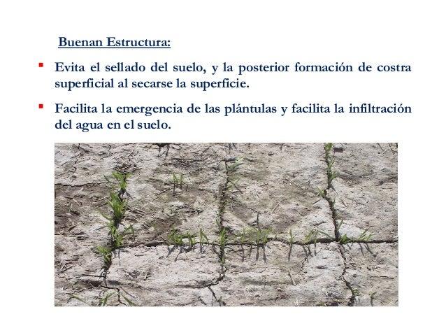 Estructura del suelo 123 for Partes del suelo
