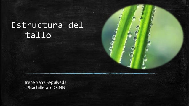 Estructura del tallo  Irene Sanz Sepúlveda 1ºBachillerato CCNN