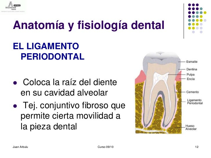 Estructura Dentaria