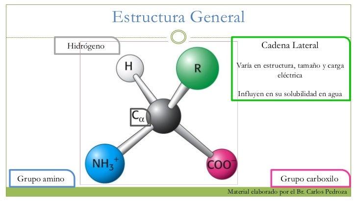 Estructura De Proteínas Y Aminoácidos