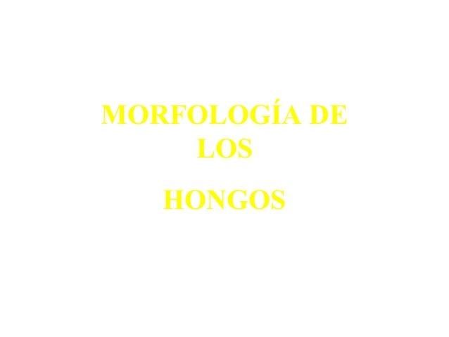 MORFOLOGÍA DELOSHONGOS