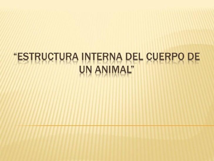 ¿Qué características poseen los siguientes                animales?