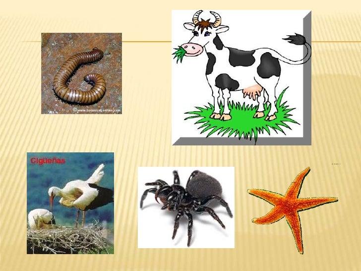 Estructura interna del cuerpo de un animal