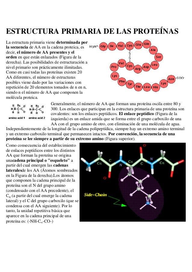 Estructura Primaria De Las Proteínas 1