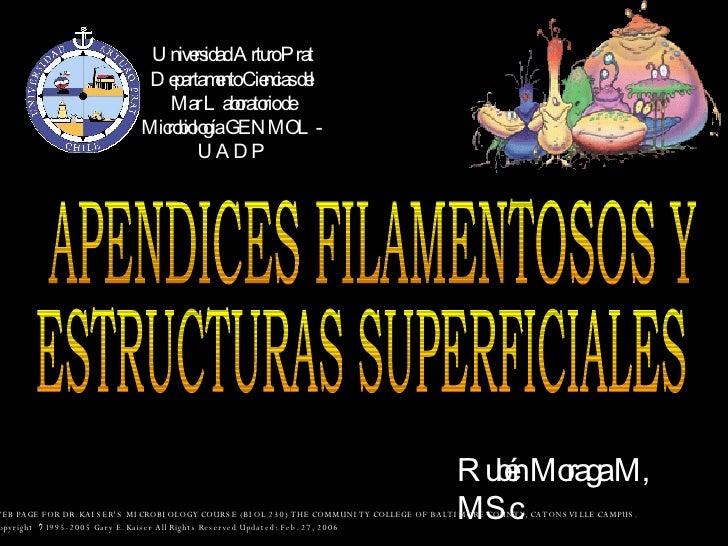 Universidad Arturo Prat Departamento Ciencias del Mar Laboratorio de Microbiología GENMOL-UADP APENDICES FILAMENTOSOS Y  R...