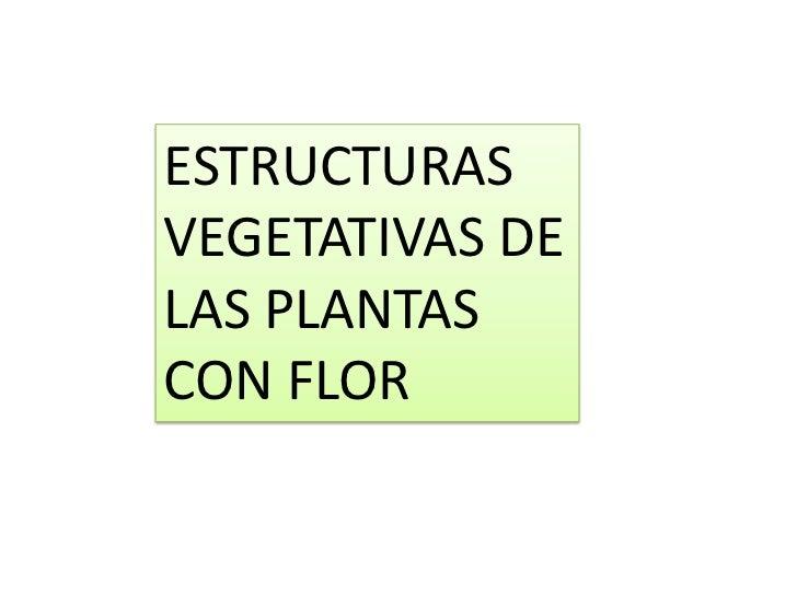 ESTRUCTURASVEGETATIVAS DELAS PLANTASCON FLOR