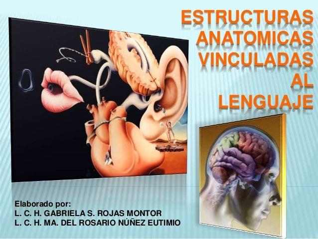 Estructuras anatomicas vinculadas al lenguaje