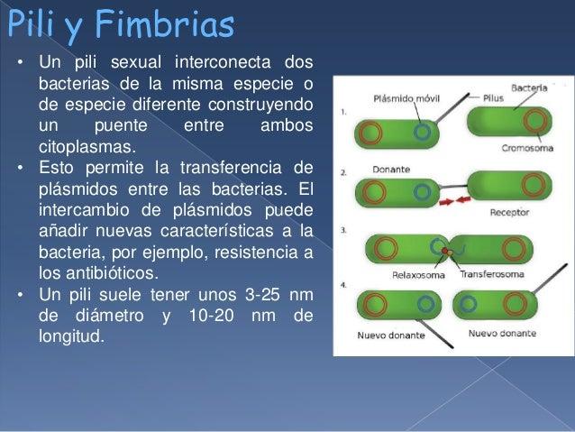 FIMBRIAS Y PILIS EBOOK