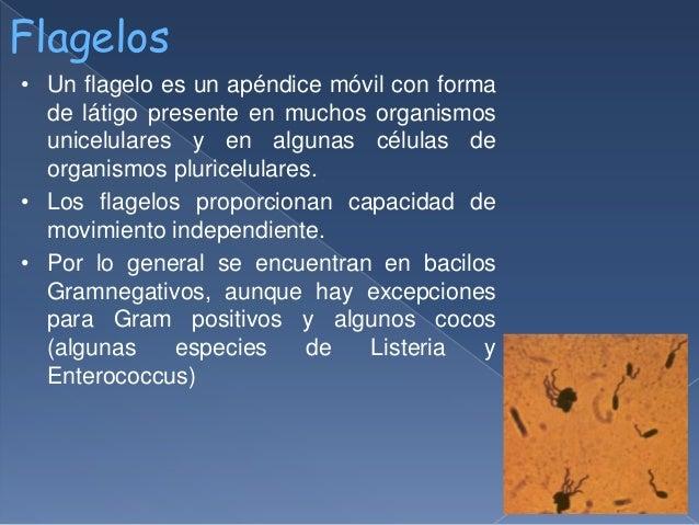 Estructuras Bacterianas Flagelo Pili Y Fimbrias