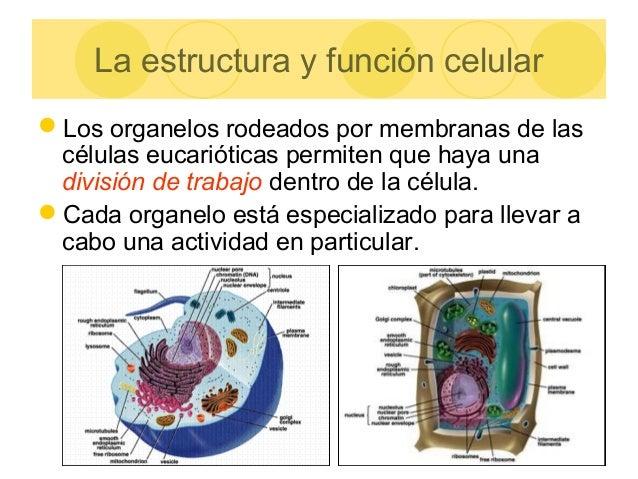 Estructuras Celulares 2