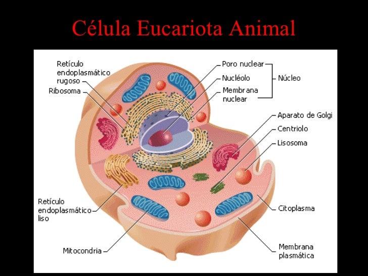 Estructuras Celulares Biologia Celular