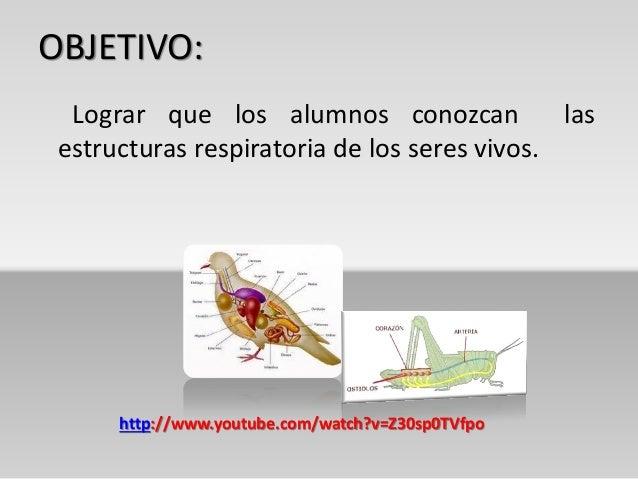 Estructuras respiratorias de los seres vivos - Estructuras libros vivos ...