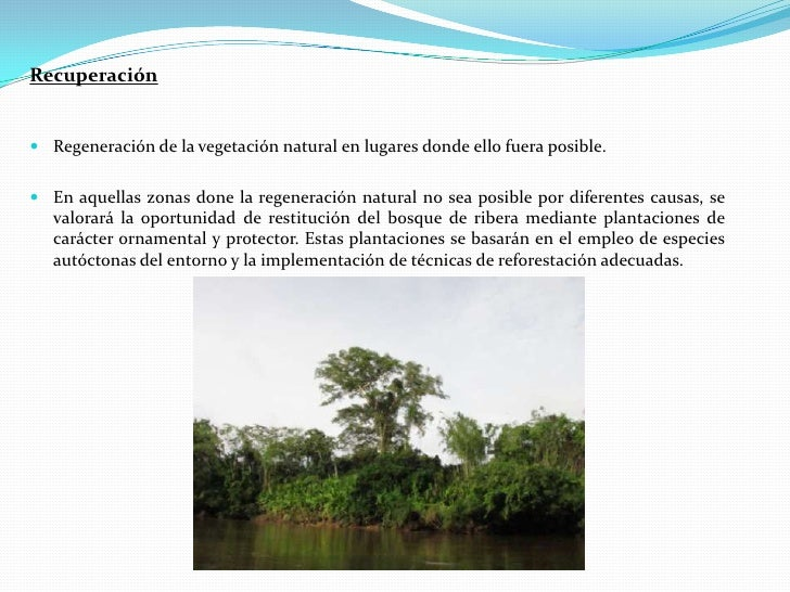 Estructura y funci n de los bosques de ribera for Vegetacion ornamental