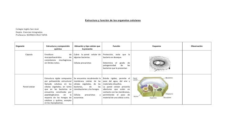 Estructura y función de los organelos celularesColegio Inglés San JoséDepto. Ciencias IntegradasProfesora: NORMA CRUZ TAPI...