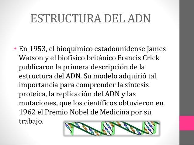 Estructura Y Funcion Del Adn