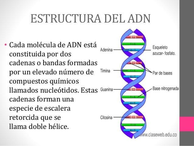 Ciencia Y Tegnologia Estructura Del Adn