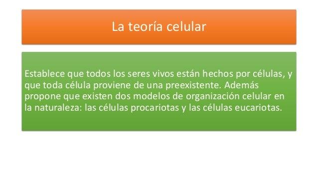 Estructura Y Funciones Células Procariotas Y Eucariotas