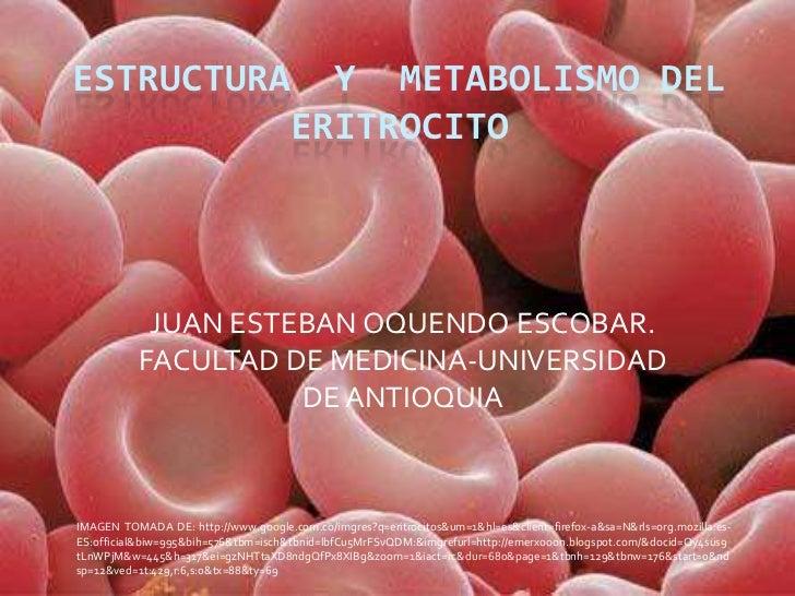 ESTRUCTURA  Y  METABOLISMO DEL ERITROCITO<br />JUAN ESTEBAN OQUENDO ESCOBAR.<br />FACULTAD DE MEDICINA-UNIVERSIDAD DE ANTI...