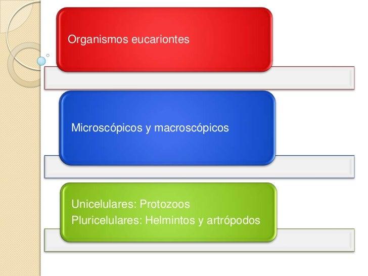Estructura y morfología  parasitaria integral 2012 Slide 3