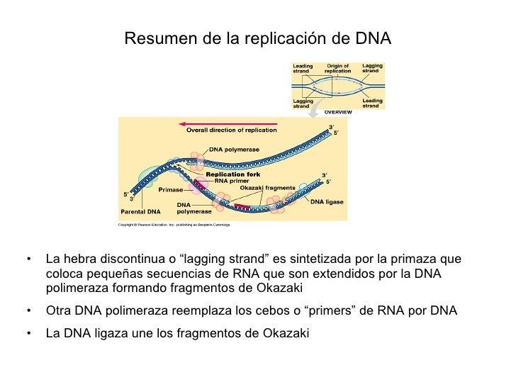 Estructura Y Replicacion De Dna
