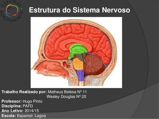 Estrutura do Sistema Nervoso  Trabalho Realizado por: Matheus Belesa Nº 11  Wesley Douglas Nº 20  Professor: Hugo Pinto  D...