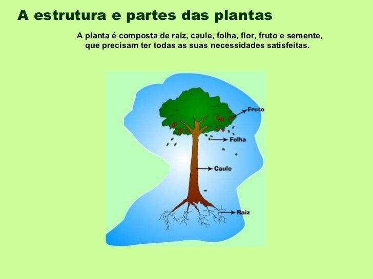 A estrutura e partes das plantas   A planta é composta de raiz, caule, folha, flor, fruto e semente, que precisam ter toda...