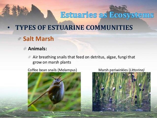 Estuaries: Communities