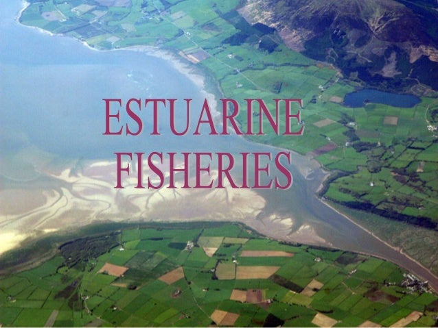 Definition of estuary☼ An estuary is defined as a semi- enclosed coastal body of water, which has a free connection with t...