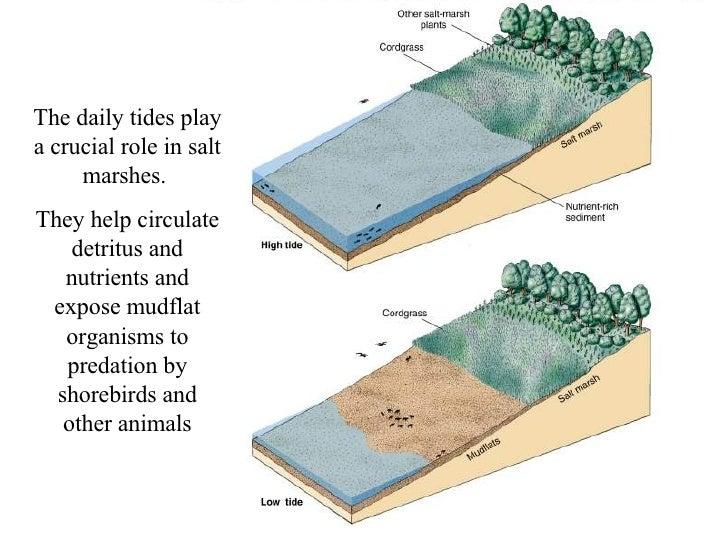 Estuary Notes