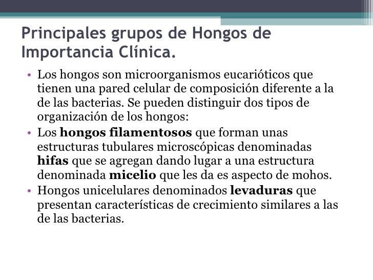 Estudio de bacterias virus y hongos - Tipos de hongos en la pared ...
