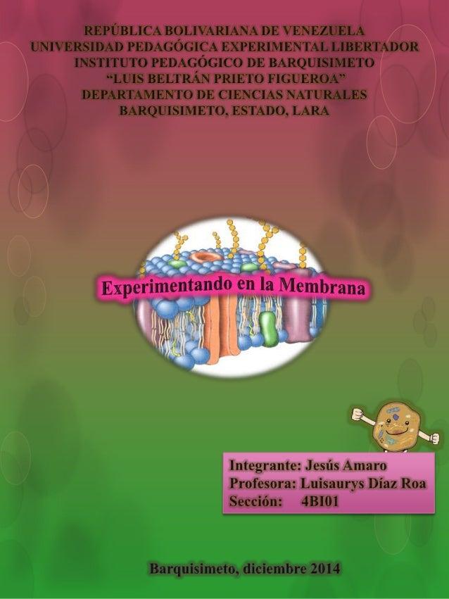 Un científico llamado Jens Skou especialista en el  estudio de la célula, sometioa la membrana celular a  diferentes exper...