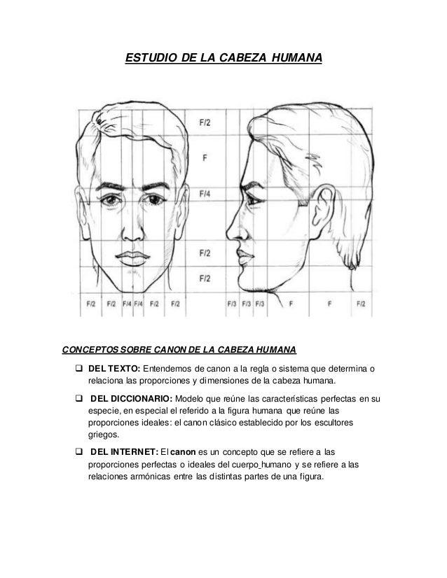 Estudio de la cabeza humana for Medidas ergonomicas del cuerpo humano