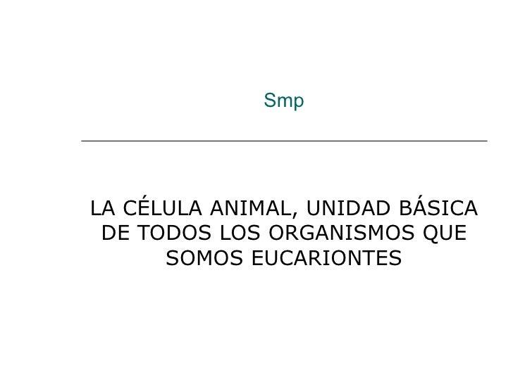 Smp LA CÉLULA ANIMAL, UNIDAD BÁSICA DE TODOS LOS ORGANISMOS QUE SOMOS EUCARIONTES