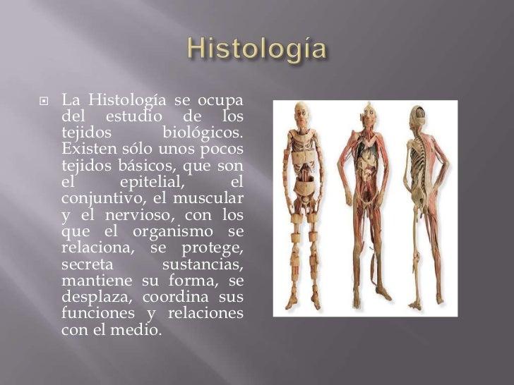 Estudio del cuerpo humano