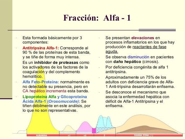 Fracción: Alfa - 1 - Esta formada básicamente por 3 componentes: - Antitripsina Alfa-1: Corresponde al 90 % de las proteín...