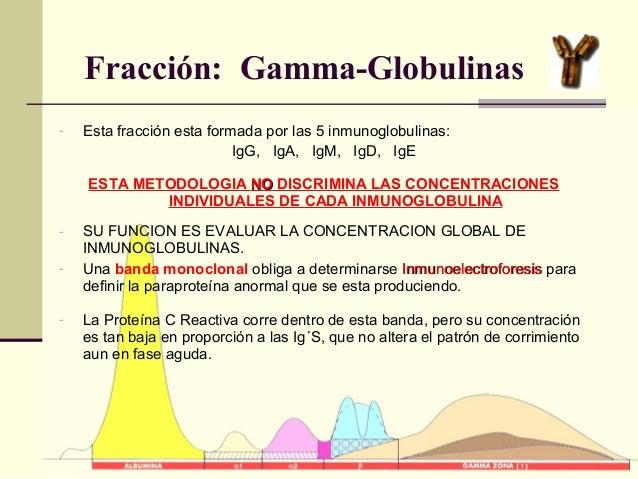 Fracción: Gamma-Globulinas - Esta fracción esta formada por las 5 inmunoglobulinas: IgG, IgA, IgM, IgD, IgE ESTA METODOLOG...