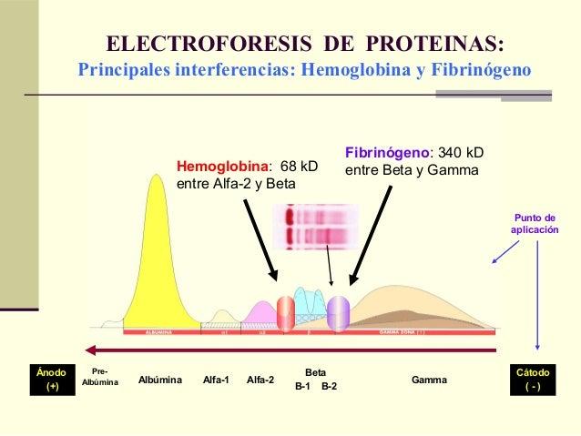 ELECTROFORESIS DE PROTEINAS: Principales interferencias: Hemoglobina y Fibrinógeno Ánodo (+) Pre- Albúmina Albúmina Alfa-1...