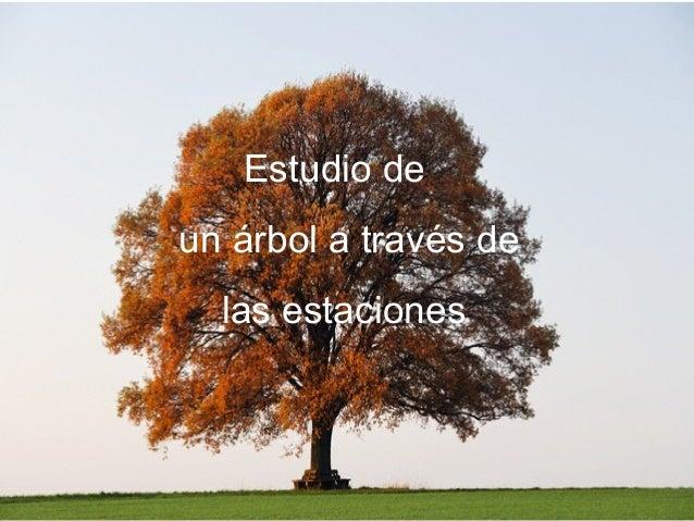 Estudio de un árbol a través de las estaciones