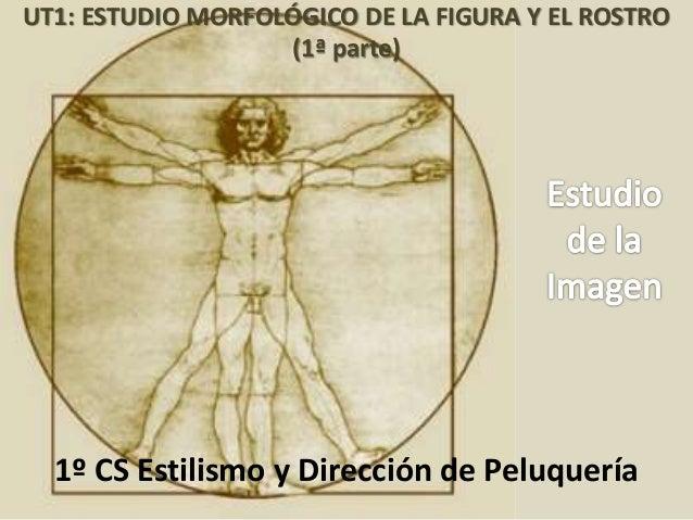 Chus Suárez UT1: ESTUDIO MORFOLÓGICO DE LA FIGURA Y EL ROSTRO (1ª parte) 1º CS Estilismo y Dirección de Peluquería