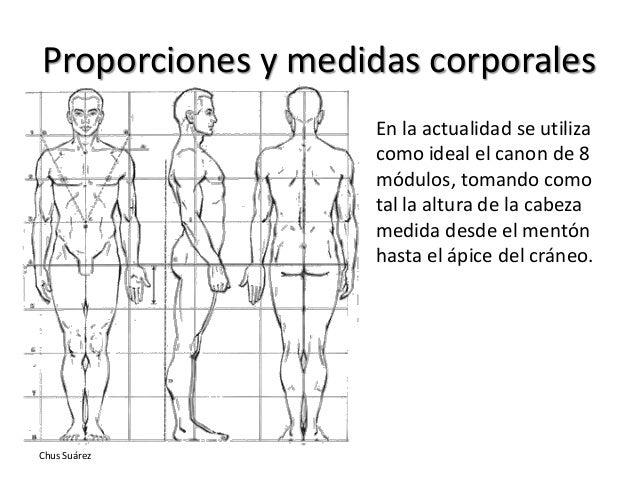 Estudio morfol gico de la figura y el rostro 1 parte for Medidas ergonomicas del cuerpo humano