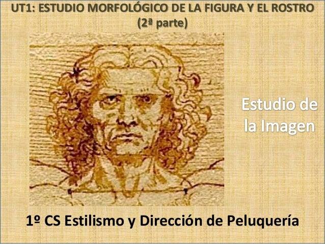 UT1: ESTUDIO MORFOLÓGICO DE LA FIGURA Y EL ROSTRO (2ª parte)  1º CS Estilismo y Dirección de Peluquería CIFP Cruz de Piedr...