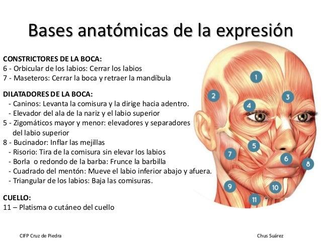 Estudio morfológico de la figura y el rostro 2ª parte