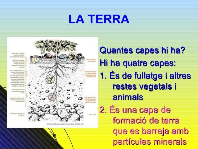 LA TERRA3. Matèria orgànica en transformació    amb petits organismes.4. Després n'hi ha una altra que es diu    «Roca Mare»